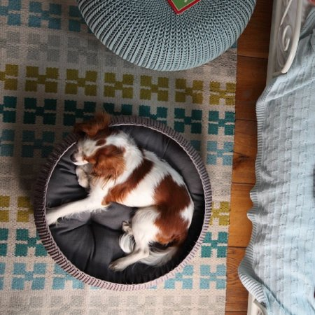 ที่นอนสุนัข Cozy Pet Bed 10%